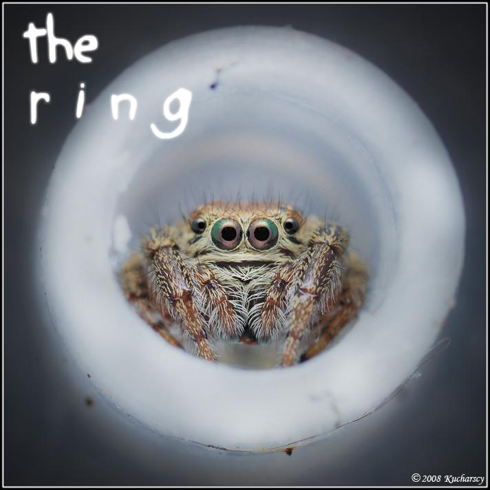The ring by Dark-Raptor
