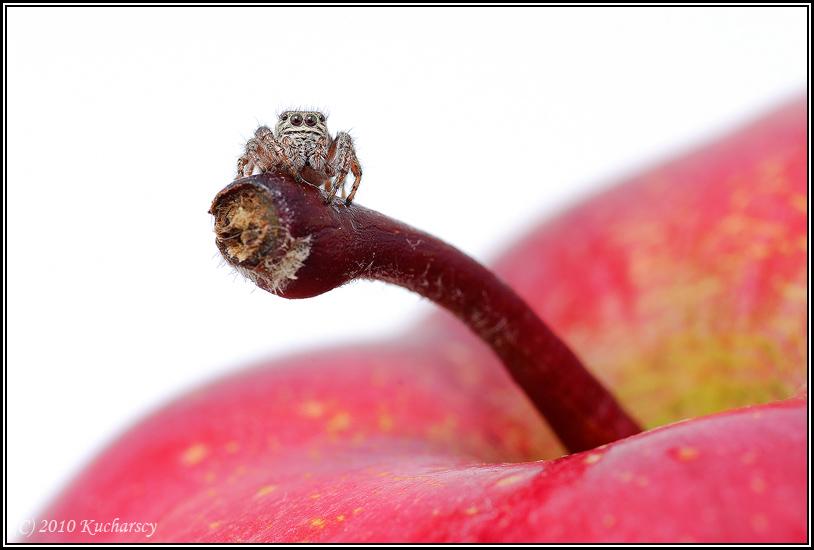 Posionous apple II by Dark-Raptor
