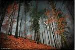 Beech forest II