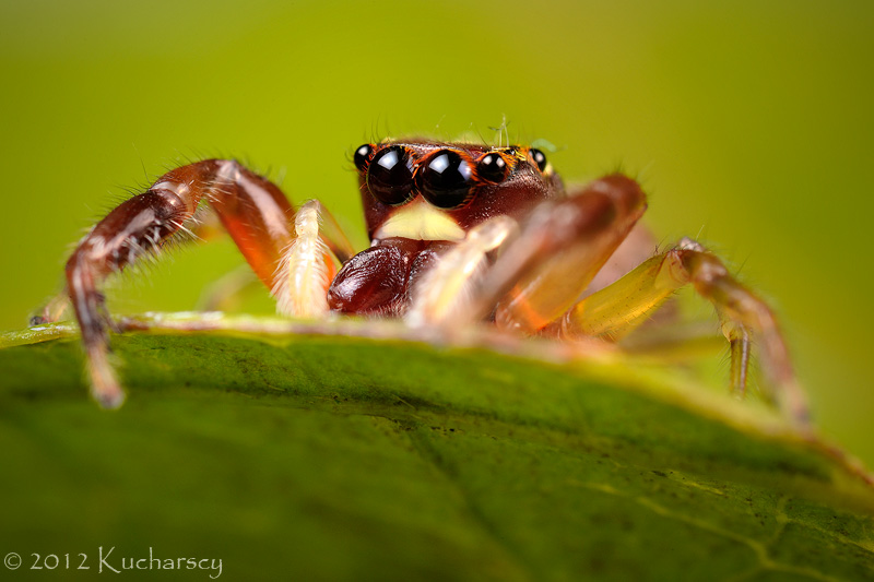 Hiding in the green by Dark-Raptor