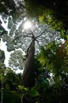 Megatree