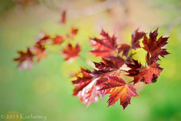 Leaf by Dark-Raptor