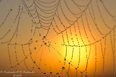 Web by Dark-Raptor