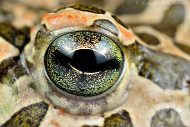 Eye by Dark-Raptor