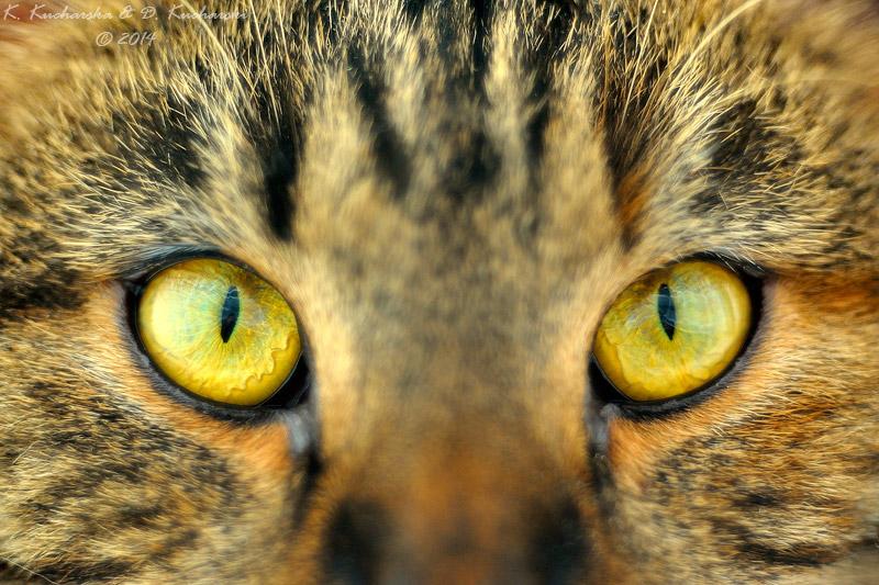 Look into my eyes by Dark-Raptor
