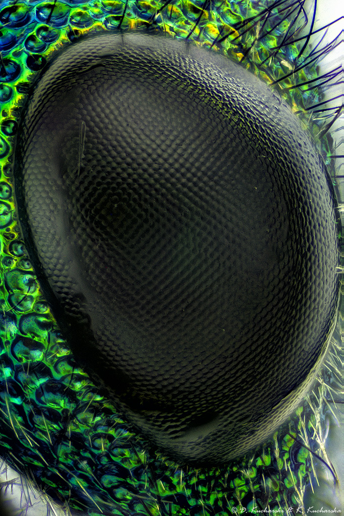 Compound eye by Dark-Raptor