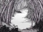 Woods in Shakesbury