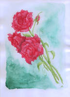 Roses by Sosak