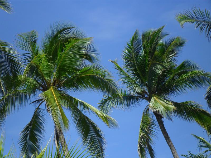Coconut Palms Beach Resort New Smyrna Beach