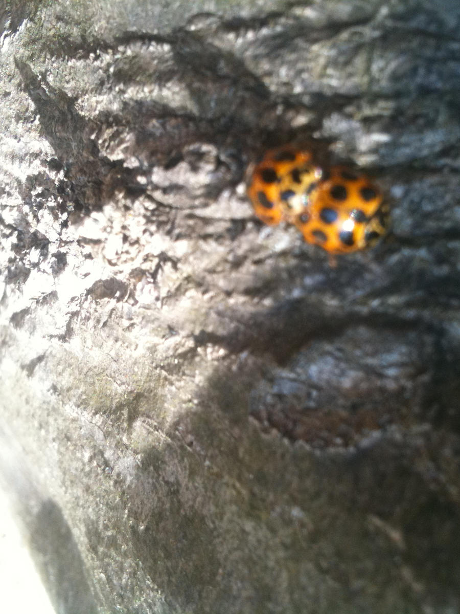 lady bugs by Weatbix