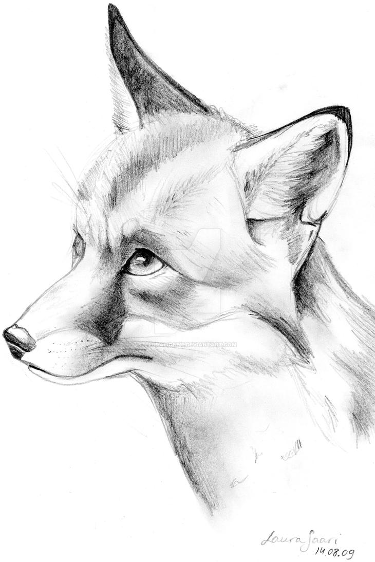 A Fox by Lauralionne