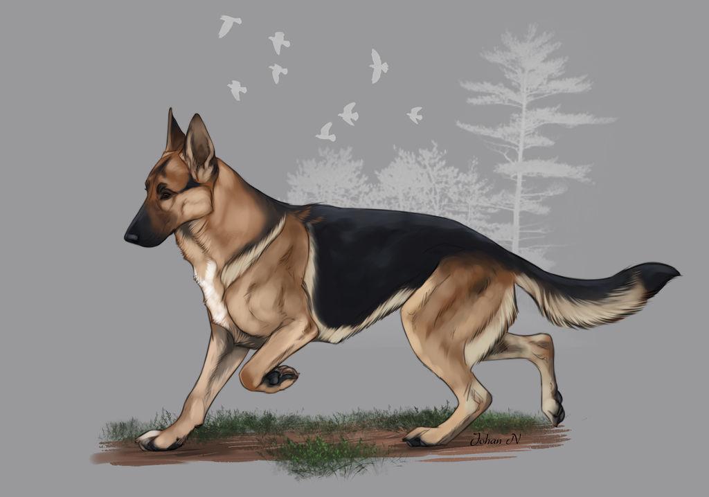 Runestorm's Faynalyn Miralen by Runestorm-kennel