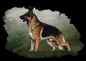 Khulve by Runestorm-kennel