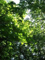 High Leaves by mattyhex