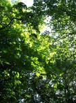 High Leaves