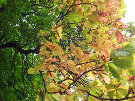 Breaking Autumn 07 by mattyhex