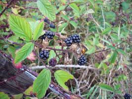 Who likes Ladybugs... by mattyhex