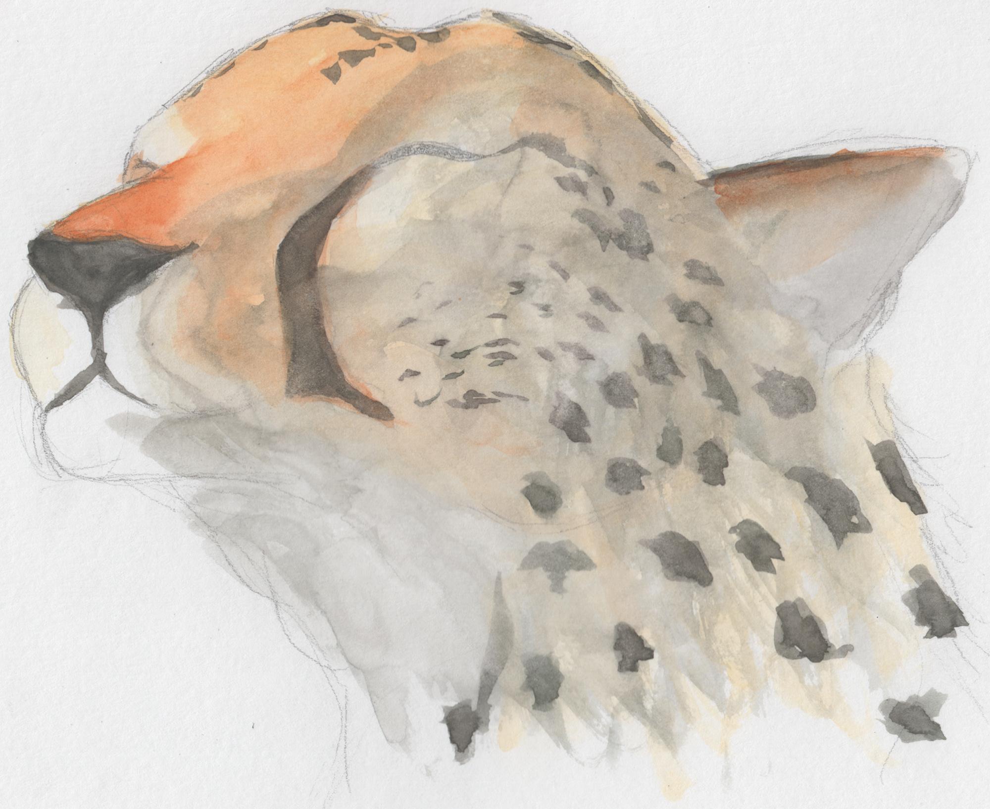 Happy Cheetah by mattyhex