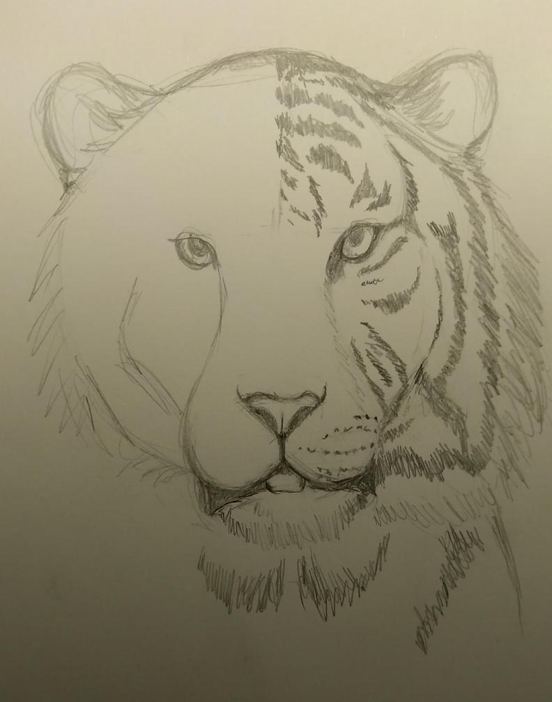 WIP Tiger by mattyhex