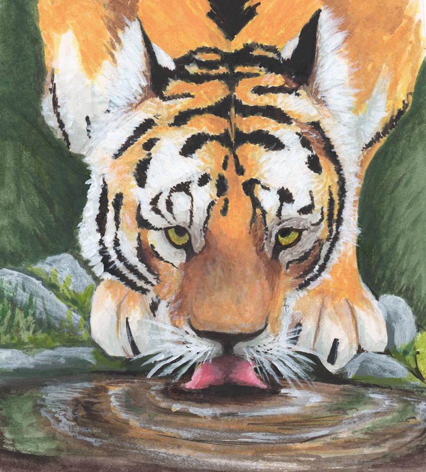 Tiger Lap by mattyhex