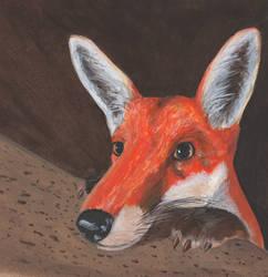 Nosy Fox by mattyhex
