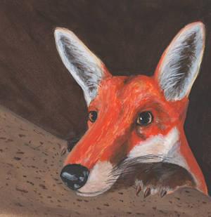 Nosy Fox