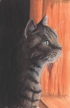 Kitty Stare