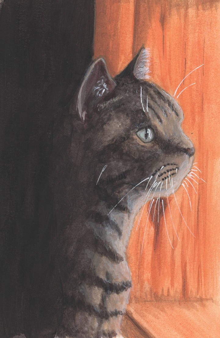 Kitty Stare by mattyhex