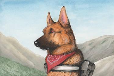 Mountain Puppy