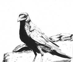 Raven Ink