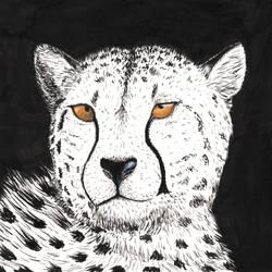 Inky Cheetah