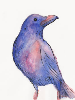 Colourful Crow