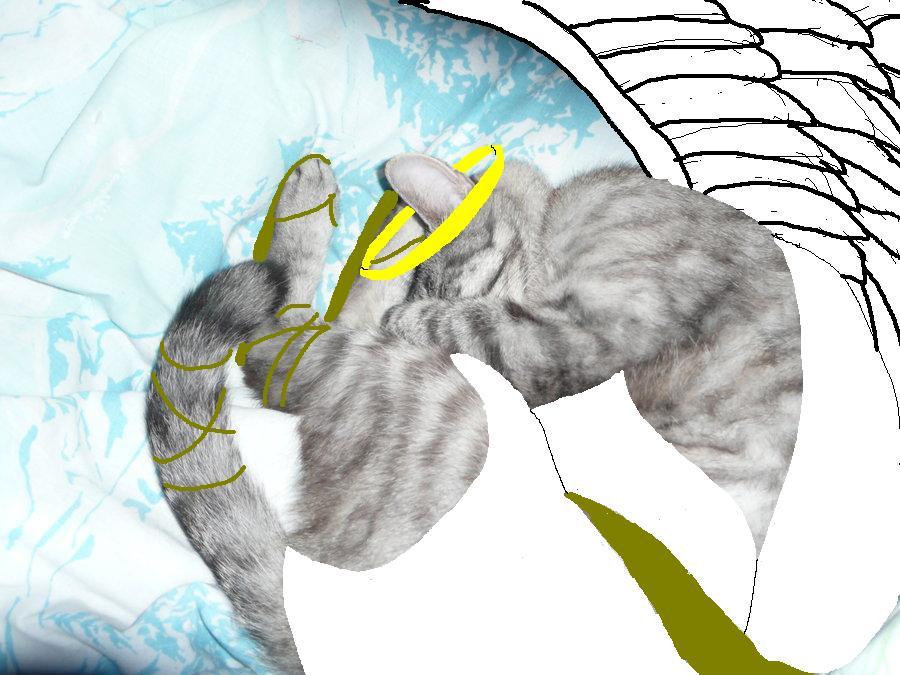 Kitty Zen by Koragg1
