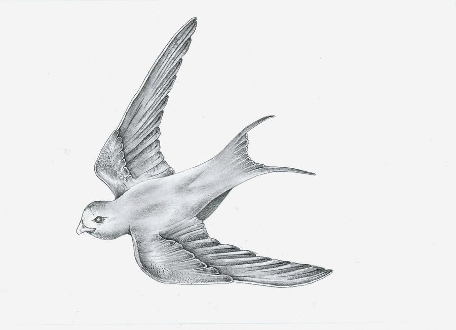 Bird Drawing For Tattoo By Rkchimaira On Deviantart