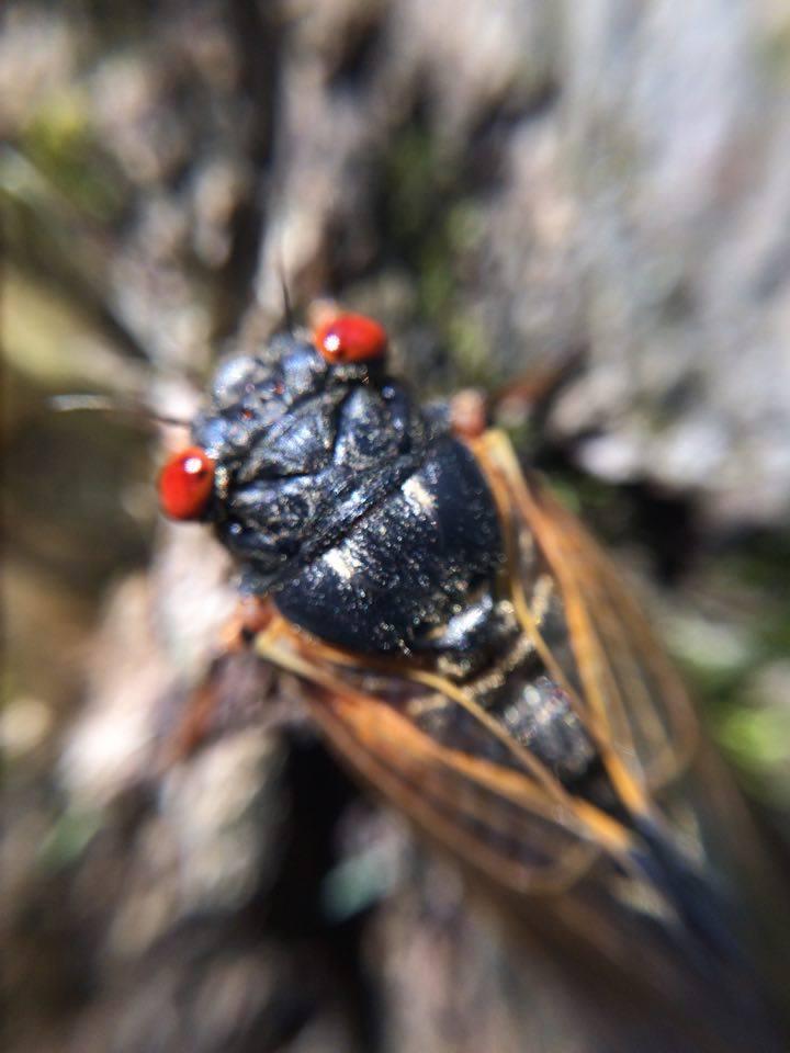 Cicada by iamdemic