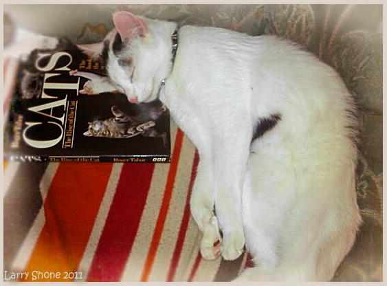The Studious Cat by Stumm47 on deviantART