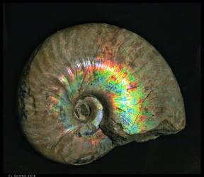 Pearlised Ammonite by Stumm47