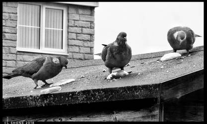 Bun Party for the Pigeons by Stumm47