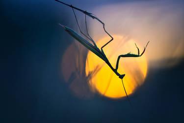 Une ombre sur la nuit by donlope01