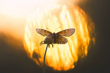 Se bruler les ailes