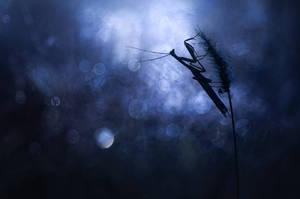 Le prdateur dans la nuit