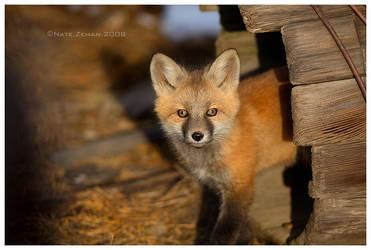 Fox Kit by Nate-Zeman