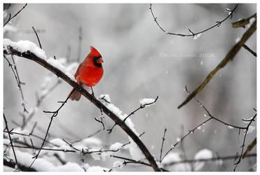 Crimson Watch by Nate-Zeman