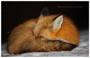 Winter Slumber by Nate-Zeman