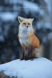 Snowy Vigil