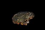 Frog PRECUT Stock PNG