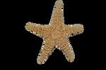 Starfish PRECUT PNG Stock