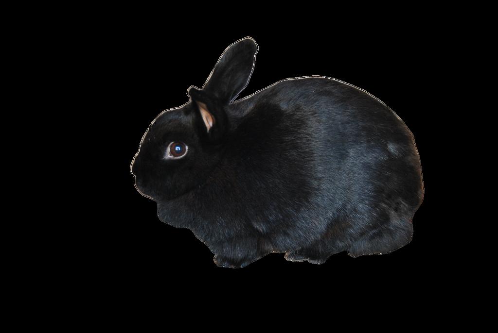 Black Rabbit PRECUT PNG Stock by Tris-Marie on DeviantArt