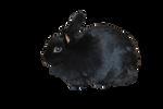 Black Rabbit PRECUT PNG Stock