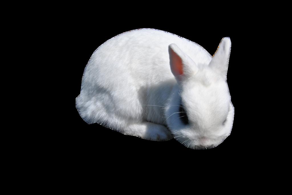 White Rabbit 2 PRECUT PNG Stock